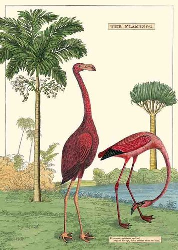 Juliste Cavallini - Flamingo