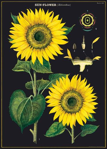 Juliste Cavallini - Sunflower