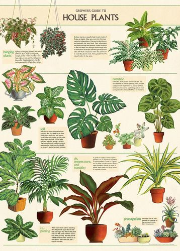 Juliste Cavallini - Houseplants