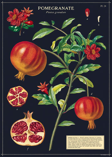 Juliste Cavallini - Pomegranate
